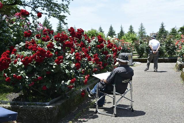 Rose Garden #2