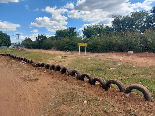 Samambaia cerca áreas com pneus e fica livre de lixões