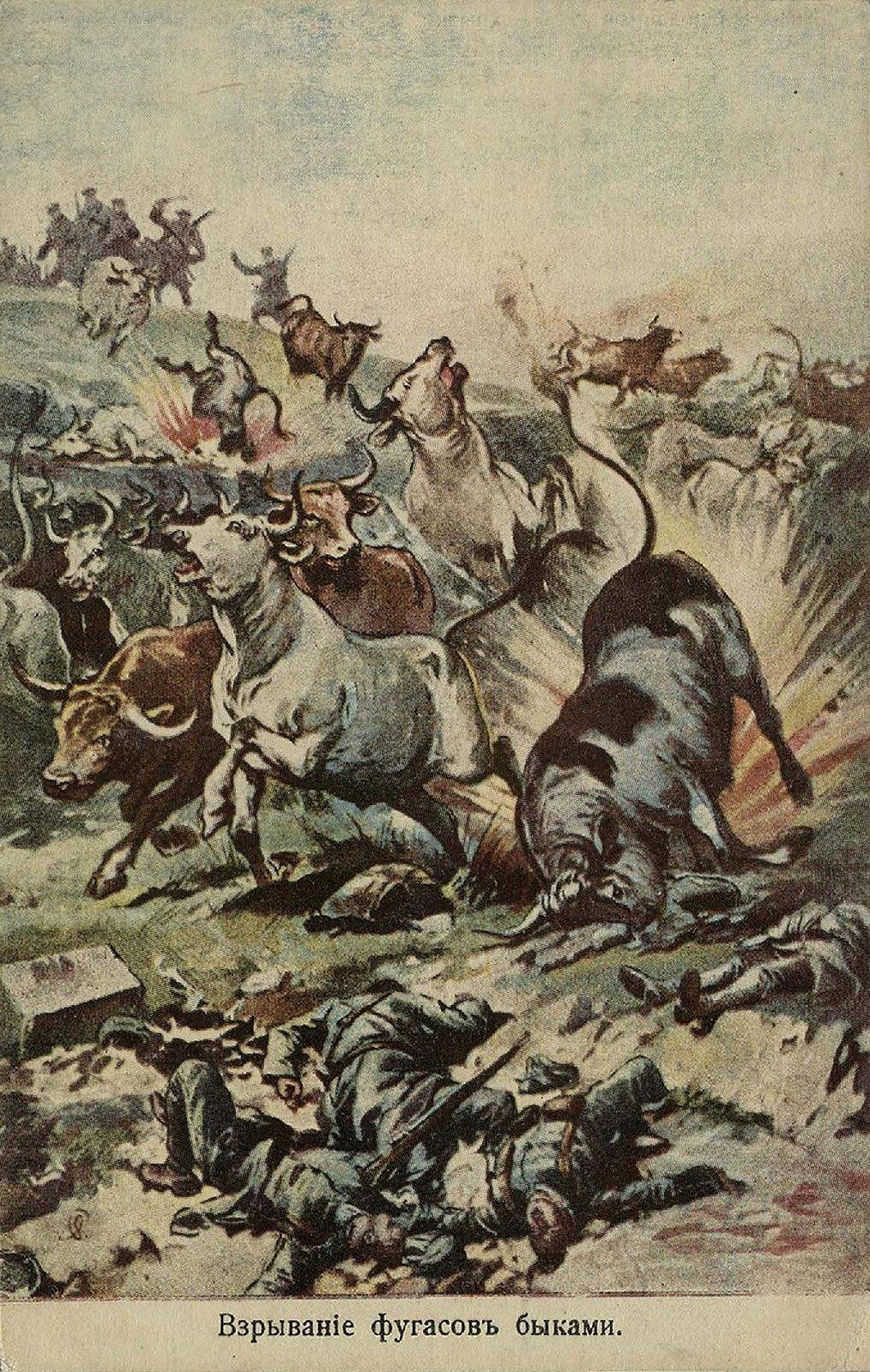13. 1915. Взрывание фугасов быками