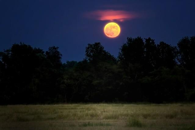 Super moon? [explored on 2021/06/03]