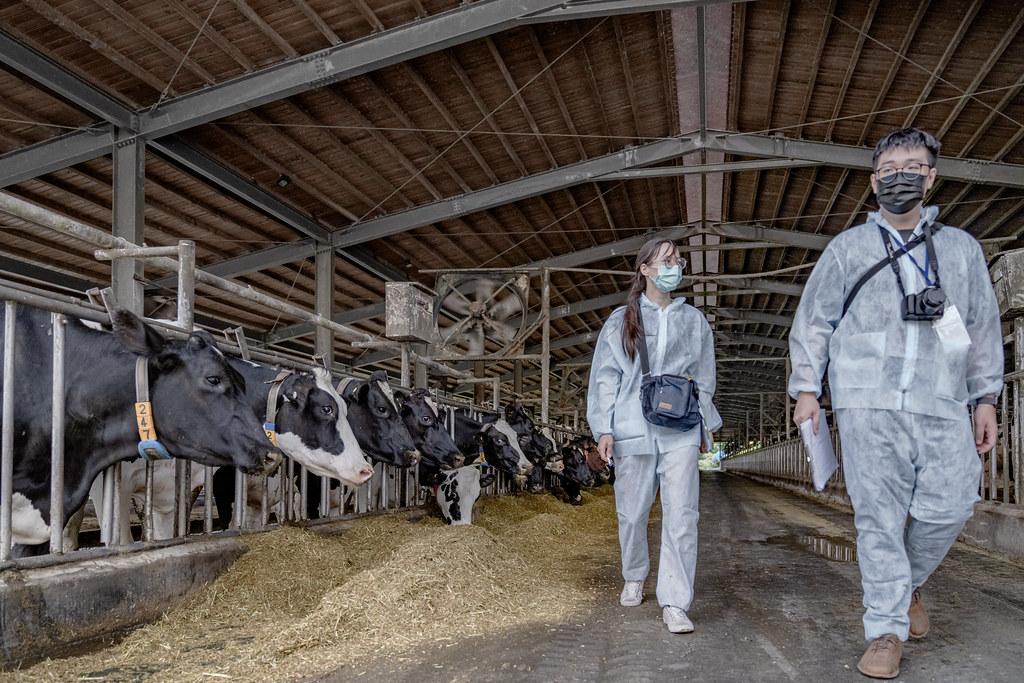 20210602首個通過動物福利標章的鮮乳上市。台灣動物社會研究會稽核人員親自到牧場進行稽核評分。圖片提供:台灣動物社會研究會