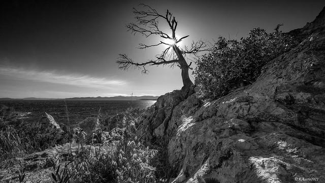 L'arbre foudroyé et le photographe caché.