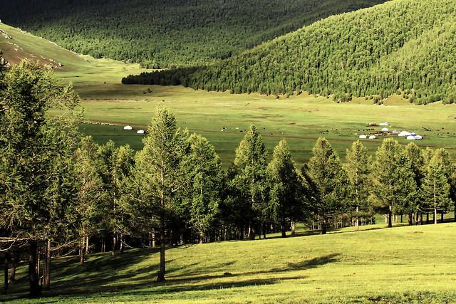 Dans la forêt de sapins – Mongolie