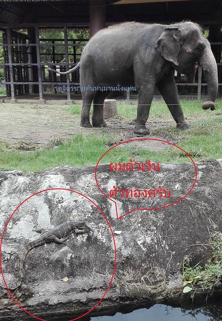 ช้างจิ๋ม เขาดิน