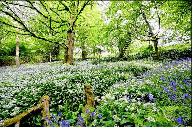 Armadale woods, Isle of Skye