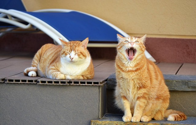 My precious tigers ❤❤