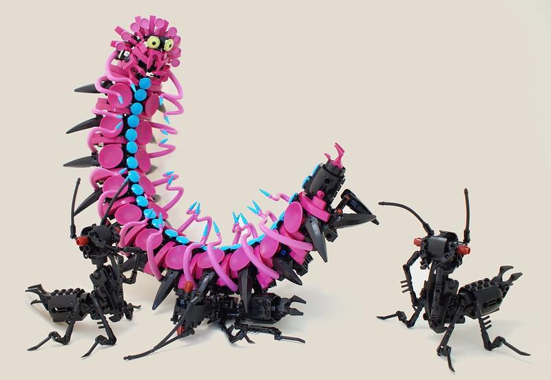 蚂蚁重量举行竞争......出了问题