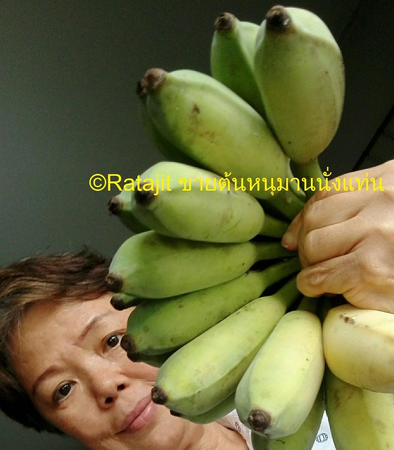 น้องหมากินกล้วย
