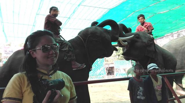 ช้างไทย และแพนด้า