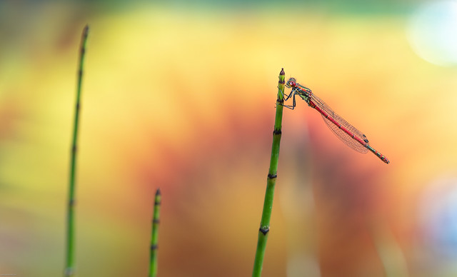 Compost and the damselfly! (Explored)