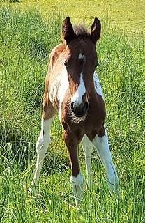 Lovely foal along the Meadway Valley Walk swcwalks swvwalk337