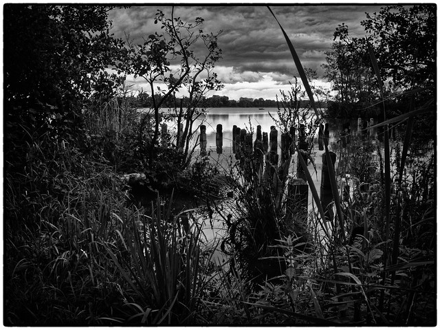 Landscape    Black and White #009