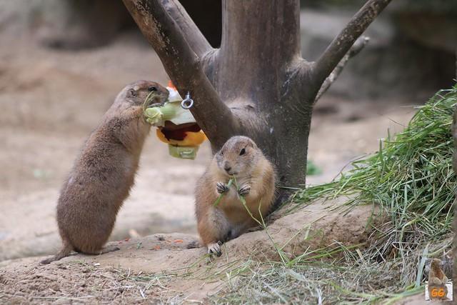 Besuch Tierpark 22.05.21031