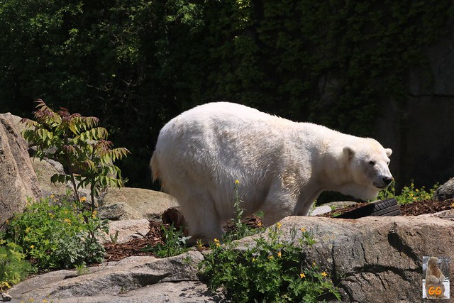 Besuch Zoo 24.05.21052