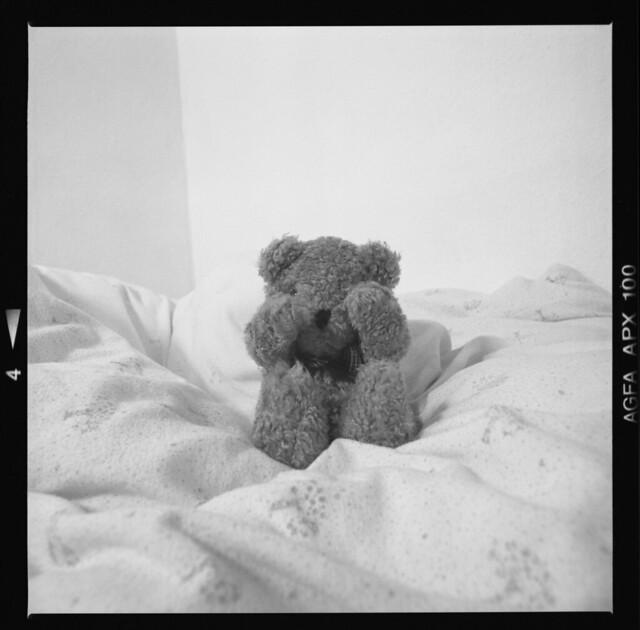 Weary bear, 1994