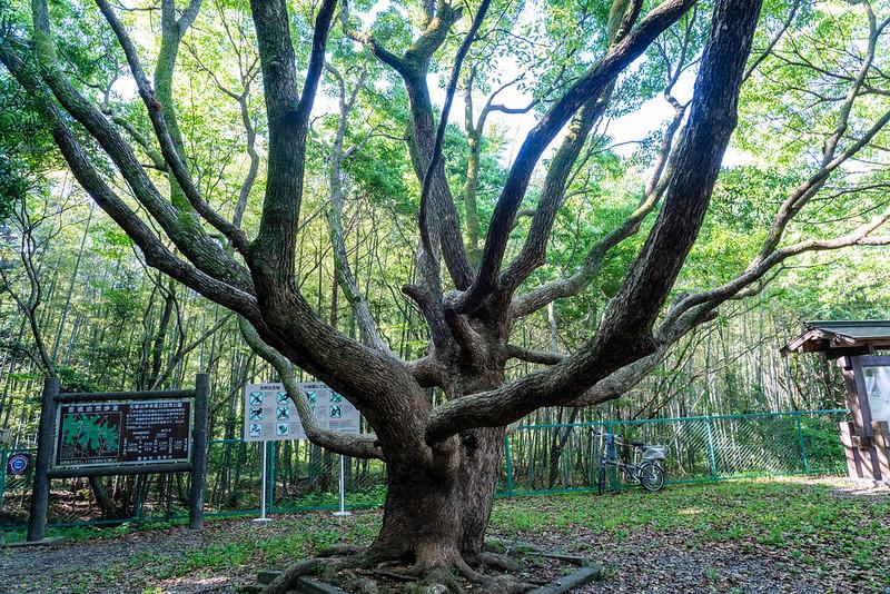 葦毛湿原の入口にある木