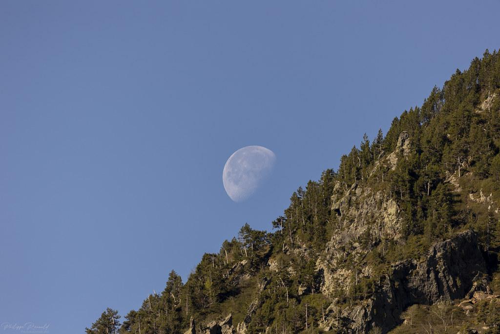 La Lune se couche sur les cimes des pins