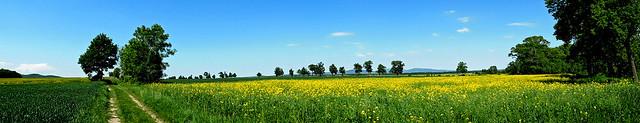 Wiosenny widok.