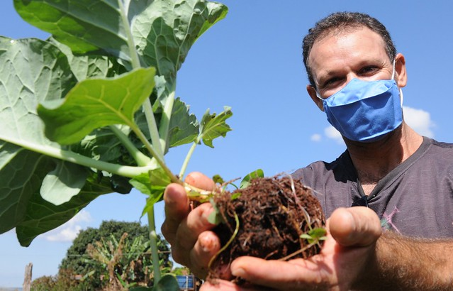 GDF injeta R$ 34,2 milhões na agricultura familiar local