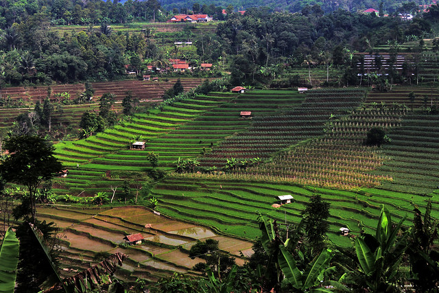 High Rice Terraces