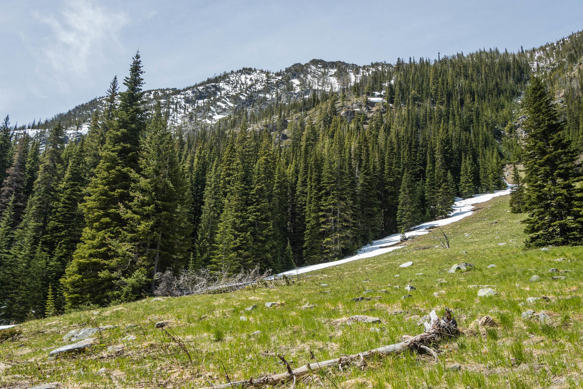 Snowshoe Ridge