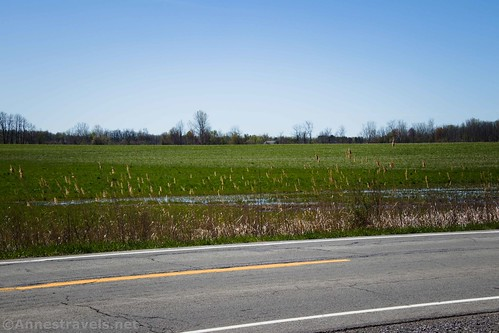 Fields along the Peanut Line, Clarence Pathways, New York