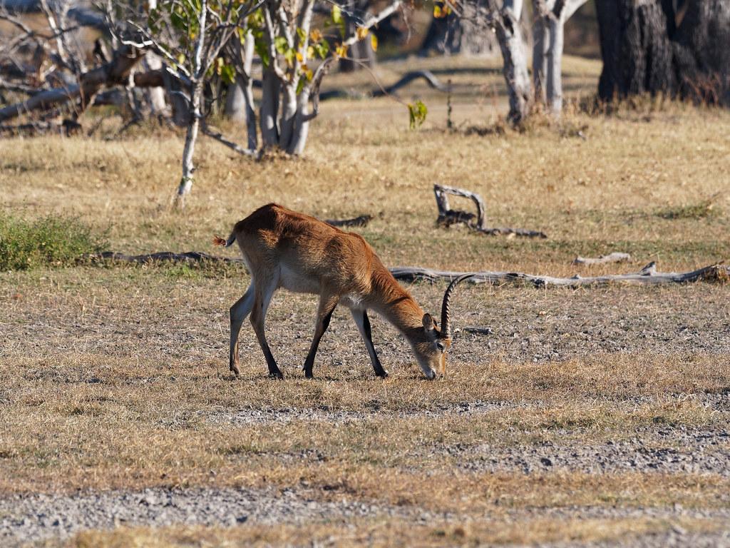 20170721-163248-00132B-Antilope
