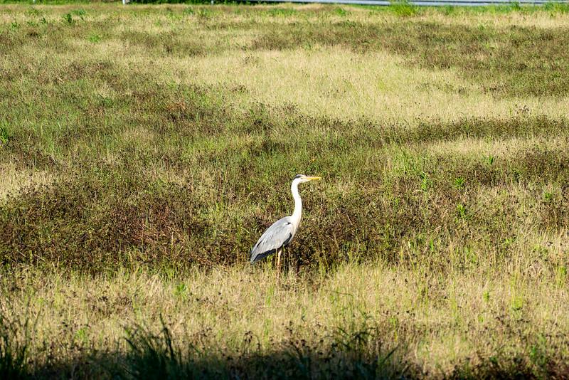 葦毛湿原の鳥