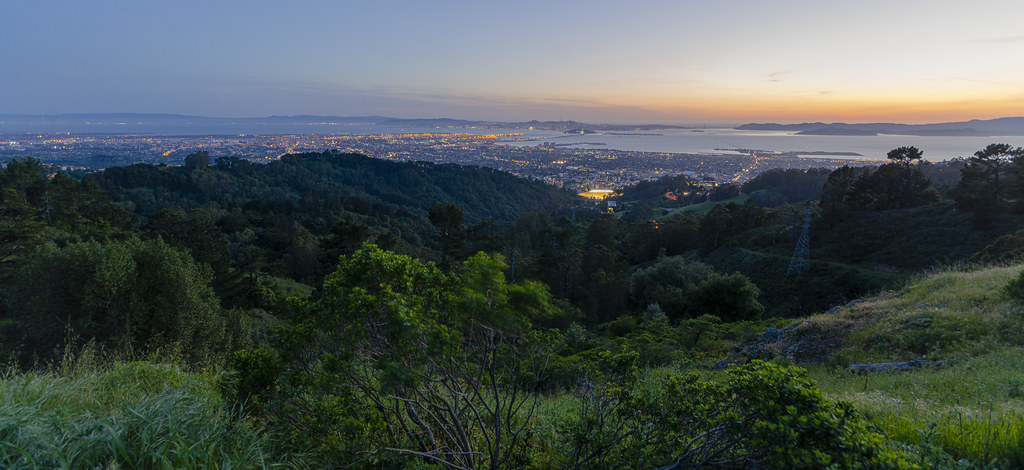 Berkeley Hills Vegetation
