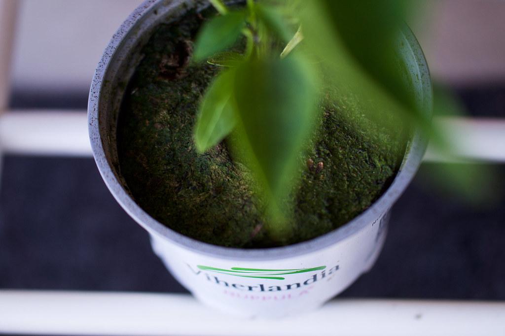kasvien-kasvatus-parvekkeella