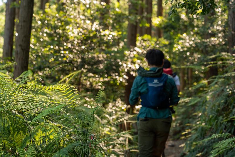 岩崎自然歩道のシダ植物