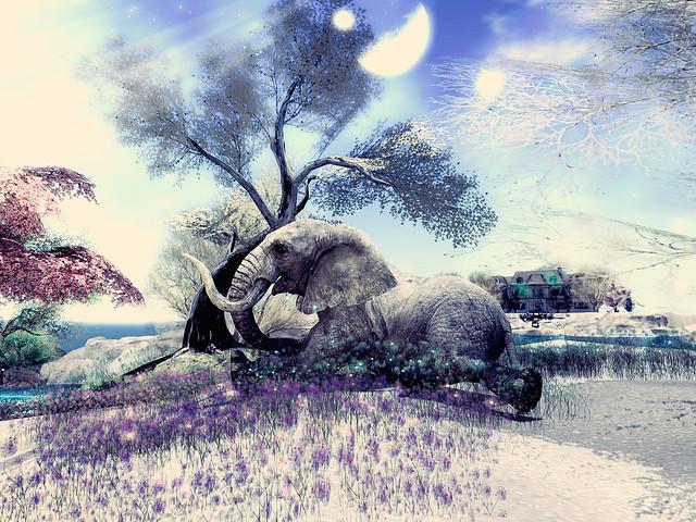 Euphoria - Memories of An Elephant Lying