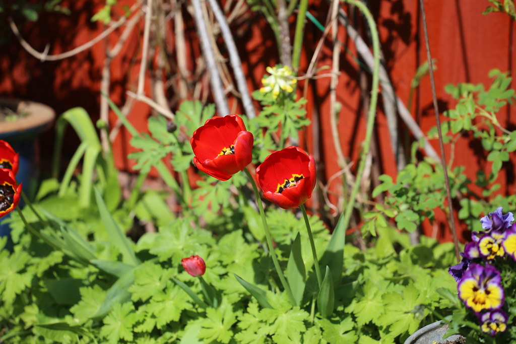 Loviisan avoimet puutarhat