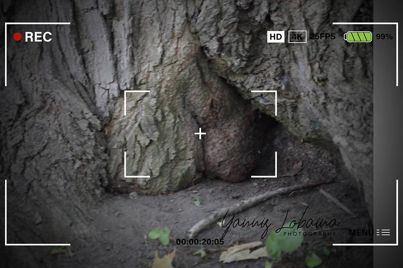 Trees_Yannis Lobaina