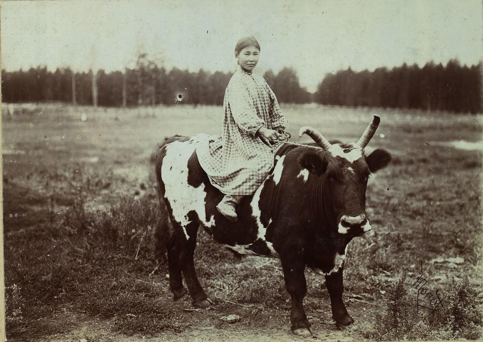 Бурятская девочка верхом на быке