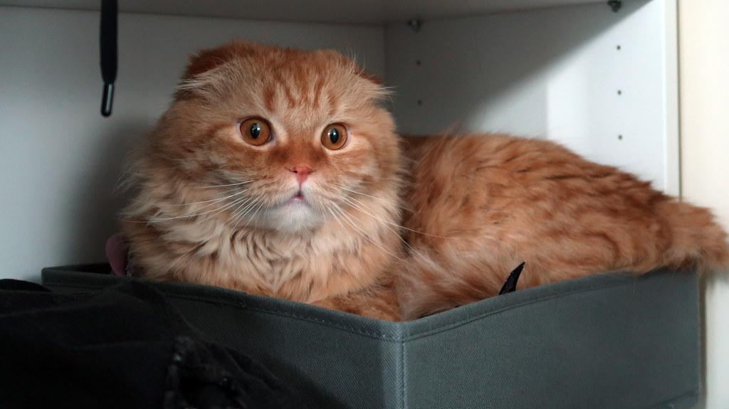 Pumpkin inside a cloth box compartment
