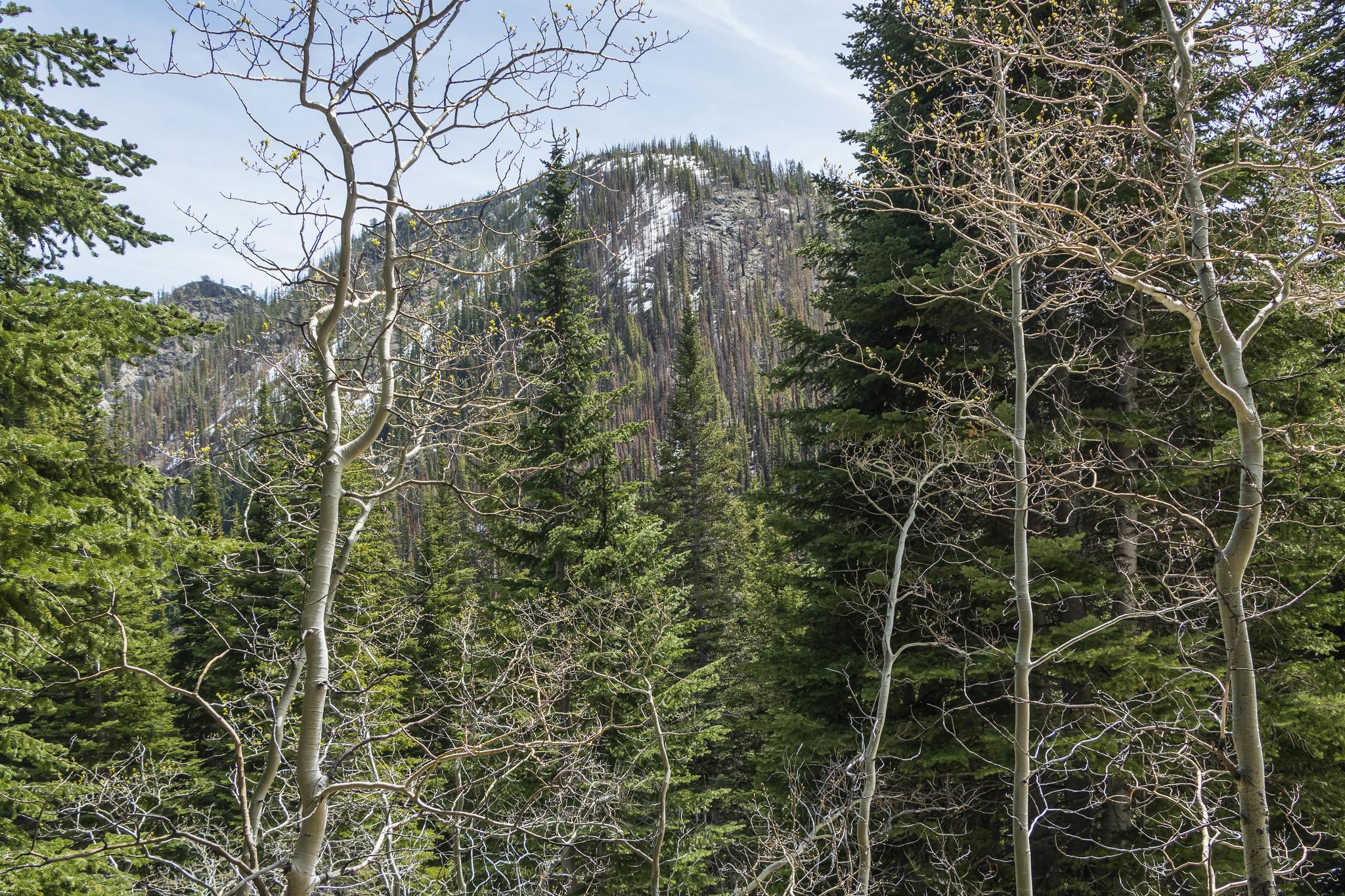 Duckhead Mountain