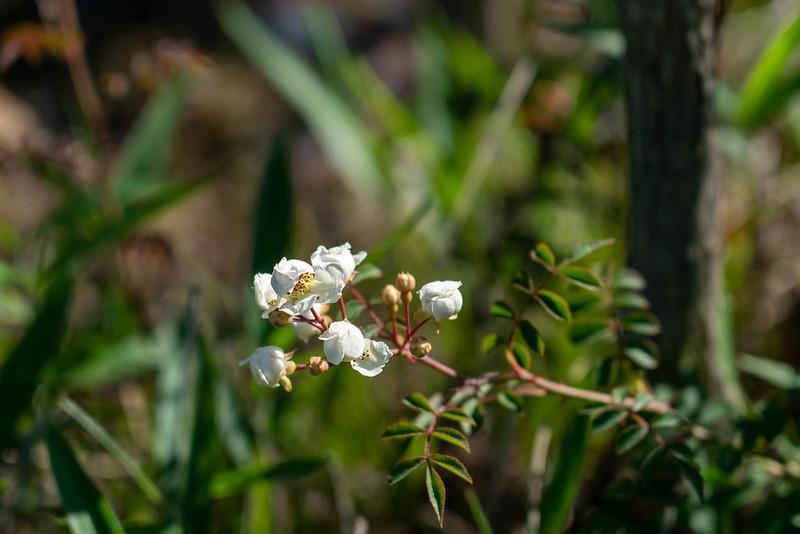 葦毛湿原の花