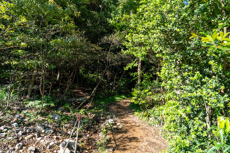 葦毛湿原から登山道へ