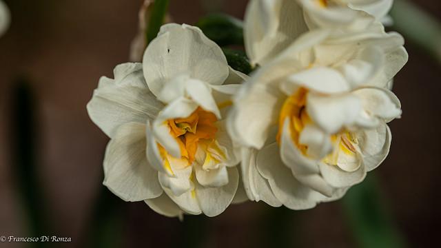 my garden .)2104/5252-10