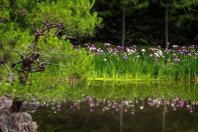 The iris pond