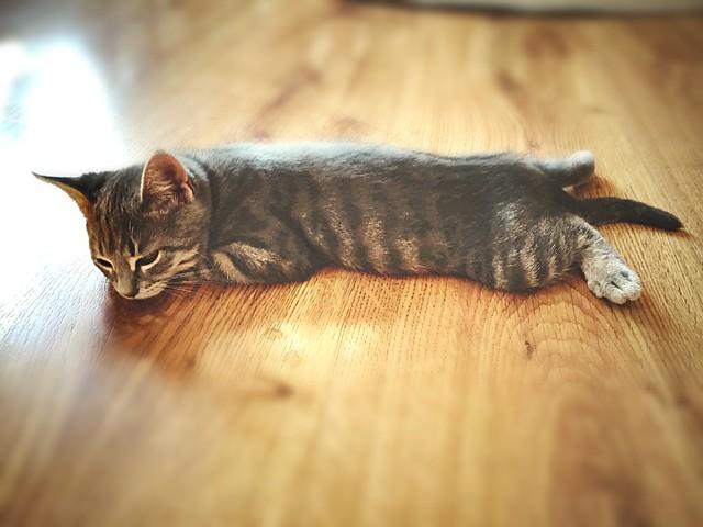 Kitten ran out of batteries…