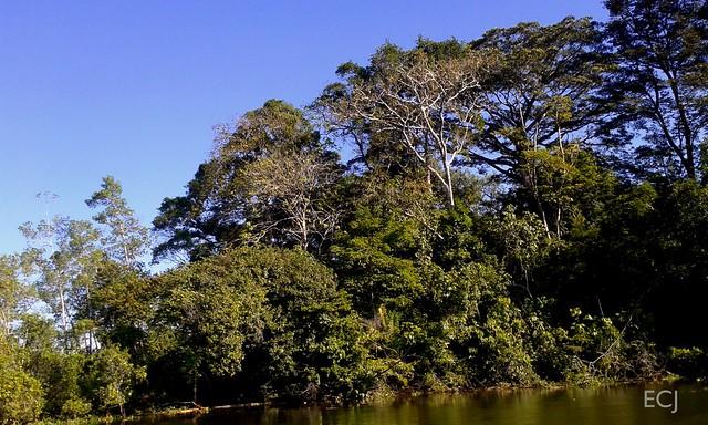 A closer green: the wonderful Térraba-Sierpe national wetland