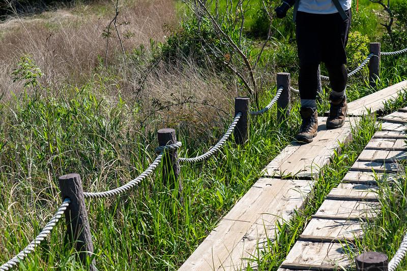 葦毛湿原の木道