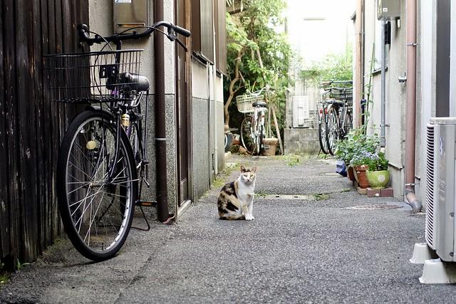Today's Cat@2021−06−03