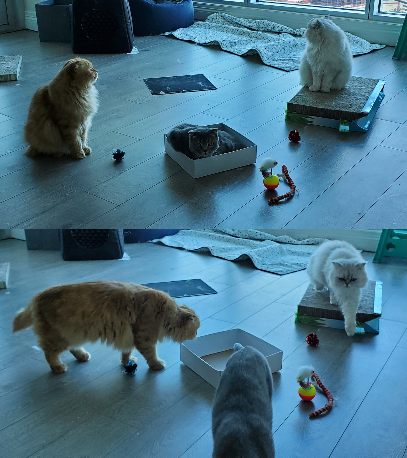 Mochi and Pudding approaching me while Pumpkin goes to steal the box