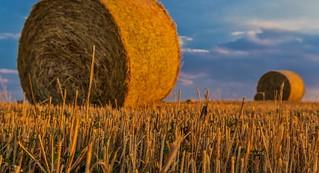Cos'è l'agricoltura biodinamica e perché non va confusa con l'agricoltura biologica