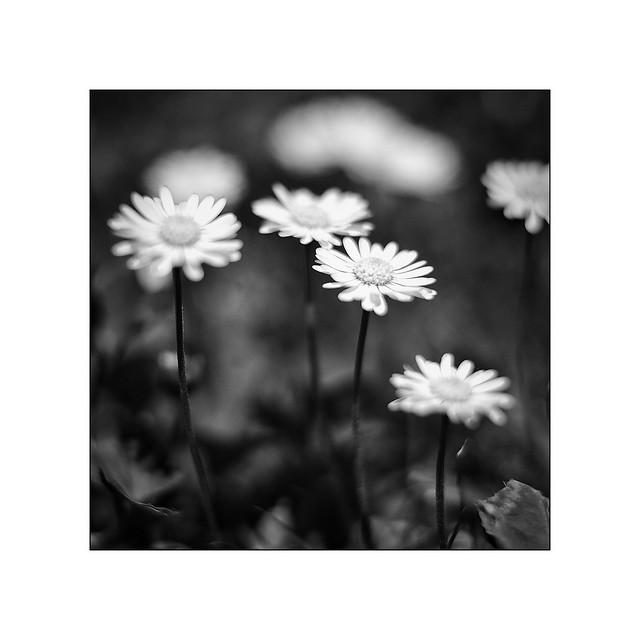 Flowers  [explored]