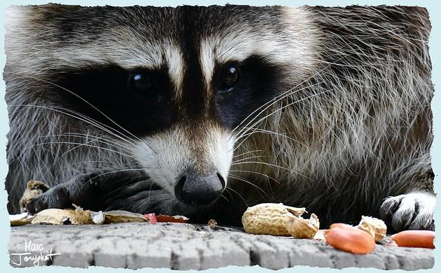 Erdnuss leer || Peanut empty