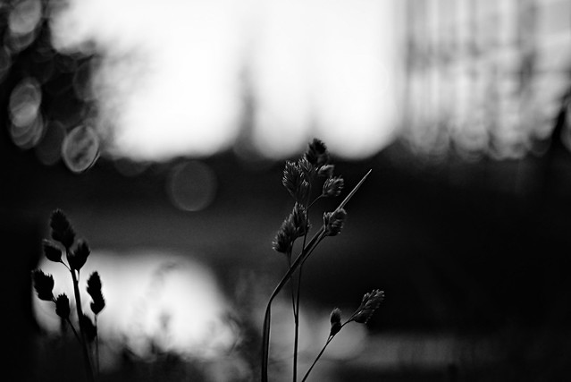 Yet another BW Bokeh